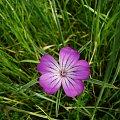 kwiatek #kwiatek #przyroda