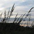 wędrówki #trawy #jesień #spacer