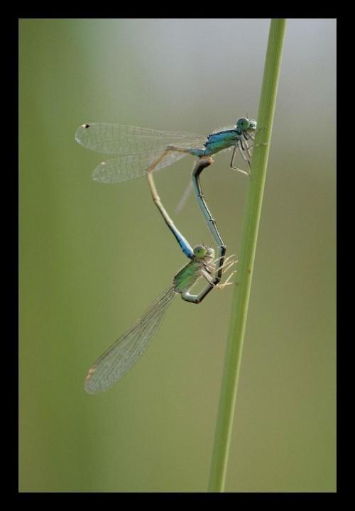#ważka #ważki #lato #jesień #łąka #pajęczyny #przyroda