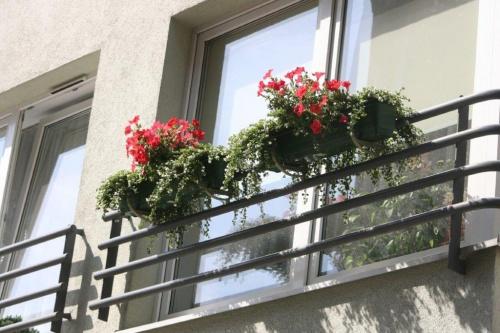 Petunie na balkonie #Balkony