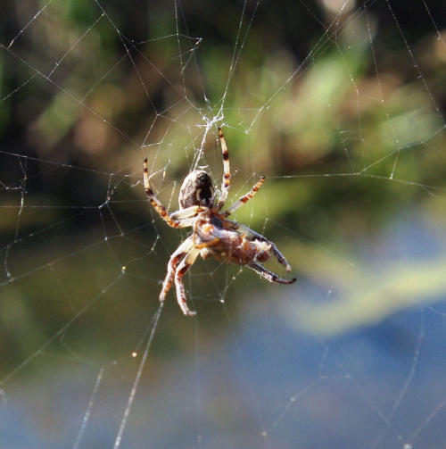 #pająki #owady