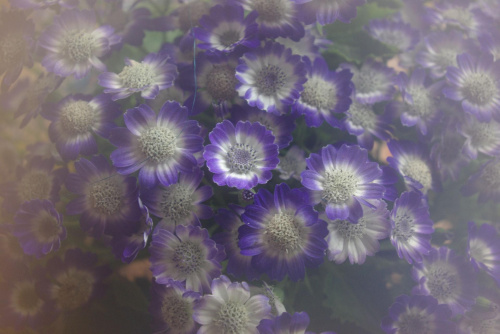 Na dzień kobiet od mojego chłopaka :) #kwiaty #natura