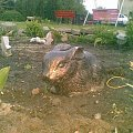 #beton #galanteria #figury #ogrodowe #amiplast