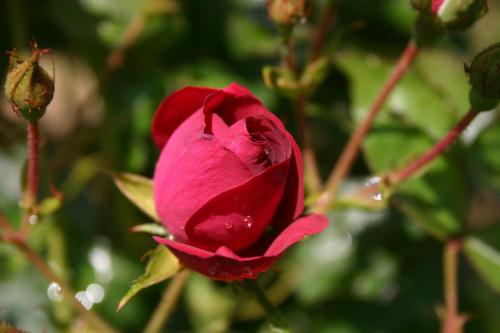#kolory #kwiaty #roze