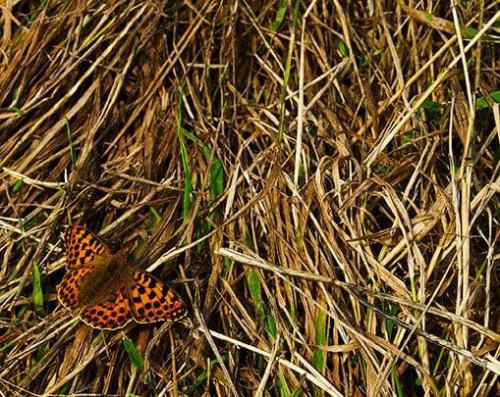 #motyl #owad #łąka #lato