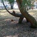 bawimy się #wiewiórki