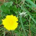 #Kwiatek #Natura #Pies
