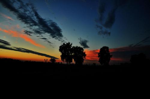 #drzewa #kolory #krajobraz