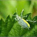 kolorowy ;D;D #makro #chrząszcz #owad