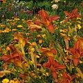 #lato #ogród #kolor #natura