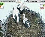 http://images41.fotosik.pl/150/efde5ce74389d59cm.jpg