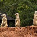 grunt to współpraca #zoo #zwierzęta