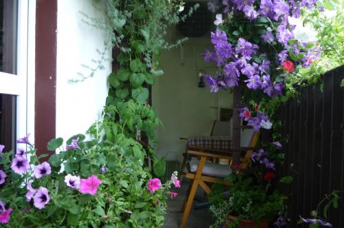 Zobacz Wątek Jakie Rośliny Na Balkontaras Kompozycje