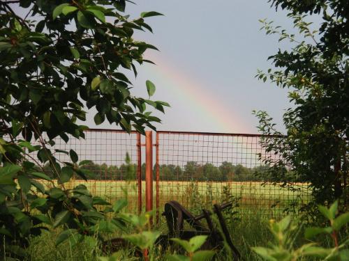 #tecza #drzewo #krzaki #plot #piekno #niebo #blekit
