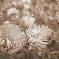 #marcinki #kwiaty #ogród