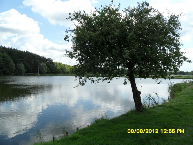 http://images41.fotosik.pl/1697/5834f8adbcafc31egen.jpg