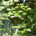 #Wiosna2009 #Arboretum #Rogów #drzewa