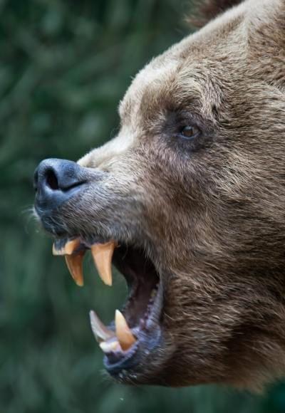 амулет медвежий коготь