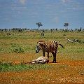 park narodowy Tsawo East #Kenia #safari #Tsawo