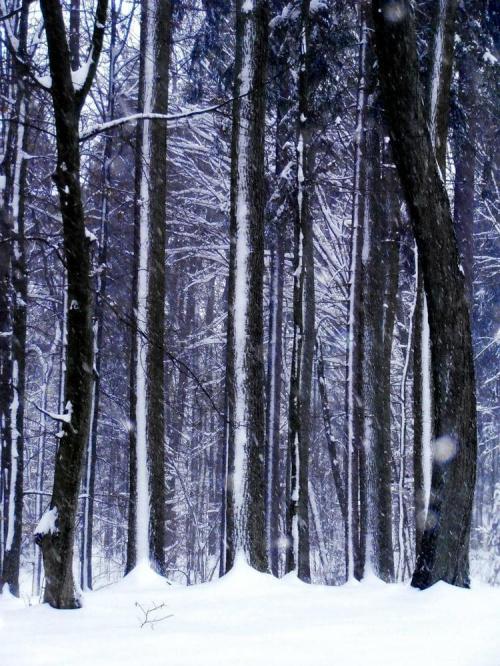 Droga do nieba. #mróz #śnieg #zima