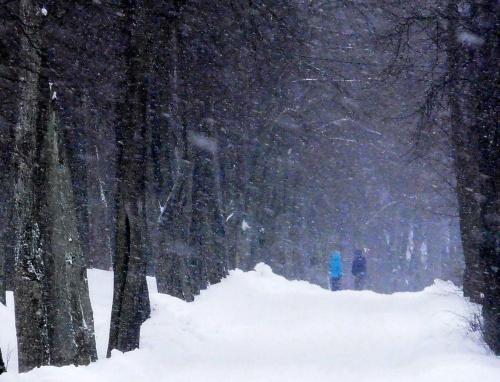 Las miejski. #mróz #śnieg #zima