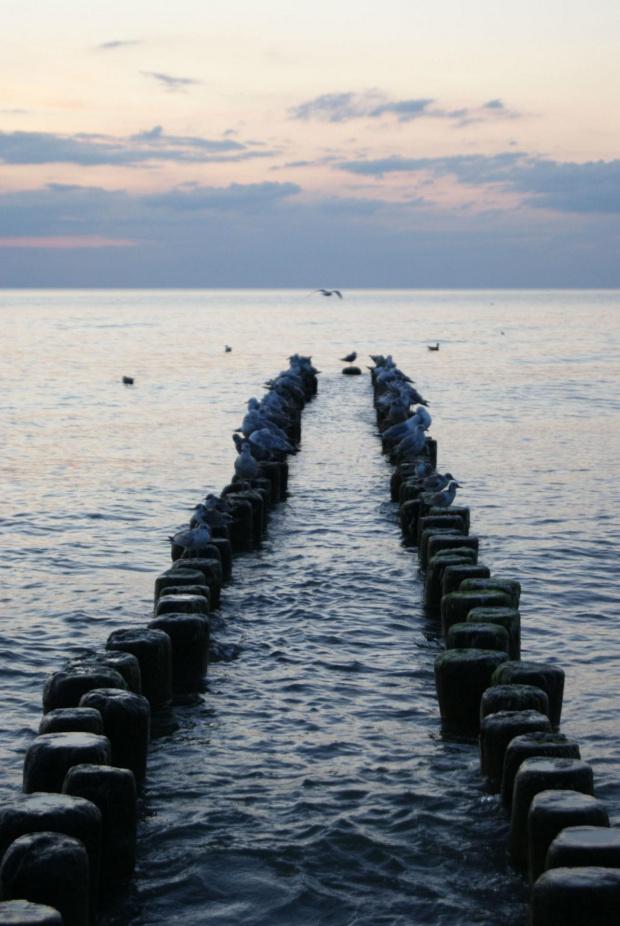 Morze #natura #przyroda #zwierzęta