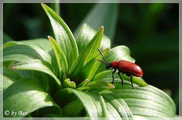 #ogród #owady #wiosna