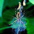 #pająk #pajęczyna