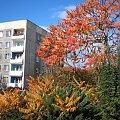 krakowskie osiedle jesienią #blok
