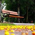 Ławka #Ławka #park #StarogardGdański