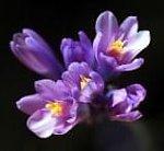http://images41.fotosik.pl/253/356f7a8f85baf281m.jpg