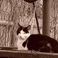 kotek na studzience #kot #studnia #wieś #sepia