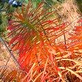 Cóż za piękne kolory ma natura jesienią szczególnie w połączeniu z funkcją macro! #barwa #barwy #jesien #jesień #kolor #kolory #lisc #liść #macro #natura #PaletaBarw #piękno #przyroda #tęcza #złoto #zółć #chwasty #uroda #kolorystyka