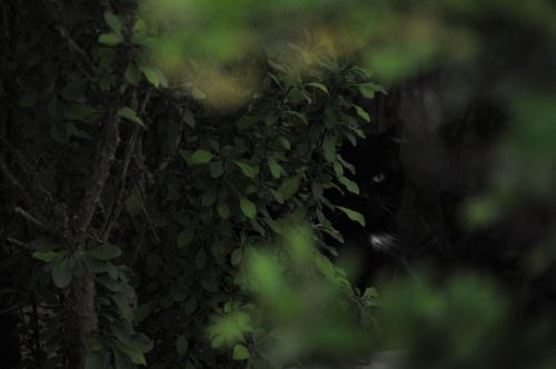 Obserwuję cię... #przyroda #koty #zwierzęta