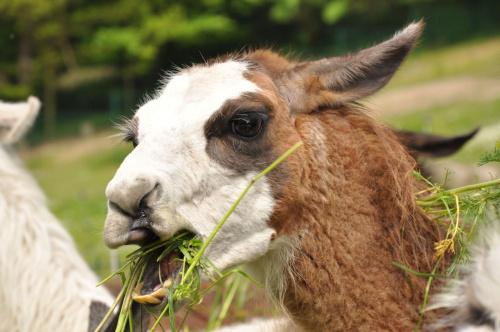 Jem! #przyroda #zwierzęta #zoo