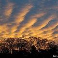 Ogniste fale na niebie... #zachód #słońce #chmury #niebo #drzewa #Racibórz