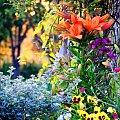 #kwiatki #ciepło #kolory #przyroda