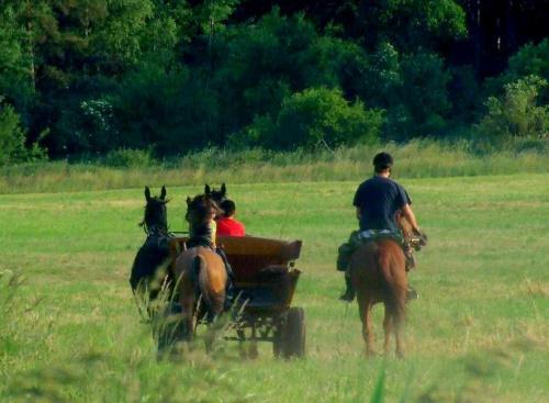na koń