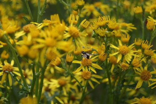 Mucha #Zwierzęta #Kwiaty