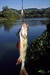images41.fotosik.pl/332/385fd6efcbeccd3cm.jpg