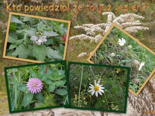 Chyba zapomniały, że to już jesień #jesień #roślinki #collage