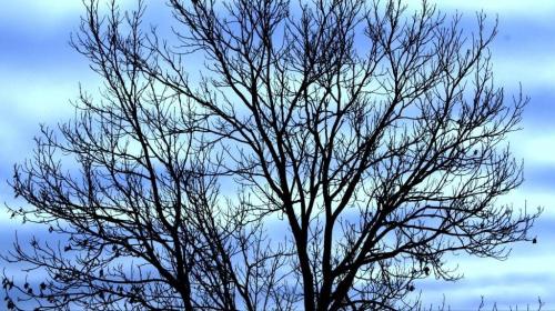 #drzewo #jesień