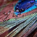 Pawie piórko i kropelki wody! ;) Sony H5 #Sony #makro #woda #krople #kropelki #pióro #paw