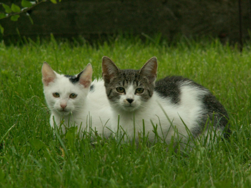 kotki dwa #kot