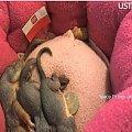 Jak sledzie #Wiewiórki