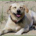 Mikoszewo-jest super!!! #psy #NadMorzem #zabawa #Ness #labrador #uśmiech