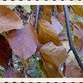 Pożegnać jesień ale inaczej #jesień #liście #rośliny #owoce #kolor #inaczej #namalowane
