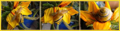 znaleziony w bukiecie, cwaniak przemycił się z kwiatami! #ślimak #kwiaty #collage