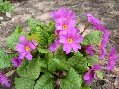 Trochę wiosny #kwiaty #wiosna