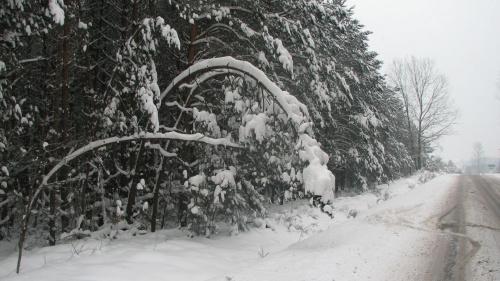 zima... droga do domu #zima #snieg #drzewa #widok #plener